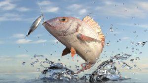 Los Diferentes Tipos de Pesca