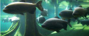 4 tipos de peces dificiles de atrapar