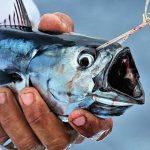 carnada para pescar
