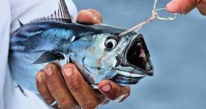pesca pezca pescar pezcar hablar de pesca pezca 2020