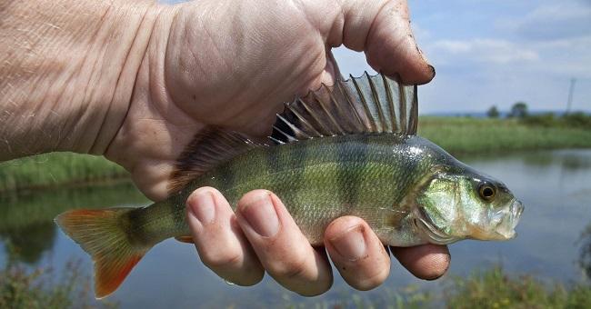la importancia de los peces para el hombre, cuan relevante es la pesca para la humanidad